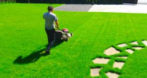 Важные особенности посадки газона