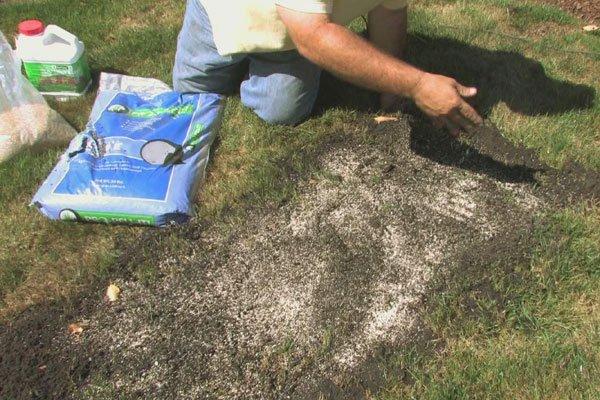 приступать к посеву зеленного покрытия