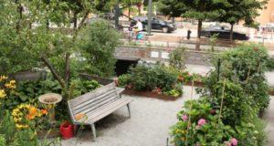 Коллективные сады-огороды всамом центре Нью-Йорка, наМанхеттане