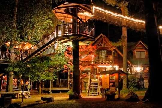 Самые красивые дома мира, построенные в лесу. Видео
